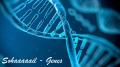 Sohaaaaail - Genes
