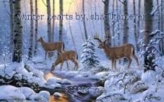 winter hearts by, shae kamerer