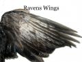 Ravens Wings