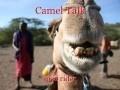 Camel Talk