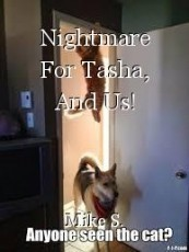 Nightmare For Tasha, And Us!