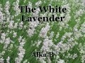 The White Lavender