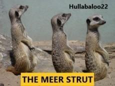 The Meer Strut