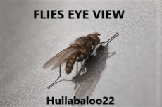 Flies Eye View