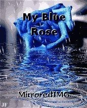My Blue Rose