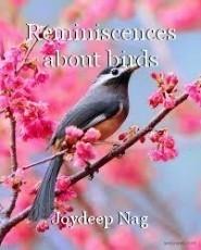 Reminiscences about birds