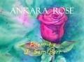 ankara rose