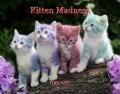 Kitten Madness
