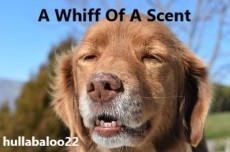 A Whiff Of A Scent