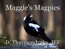 Maggie's Magpies