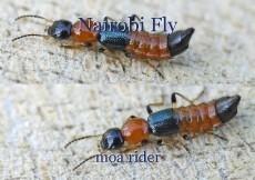 Nairobi Fly