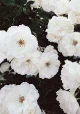 my flower.