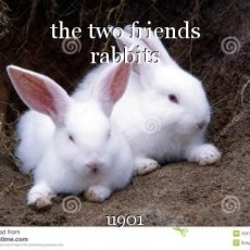 the two friends rabbits
