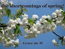 the shortcomings of spring!