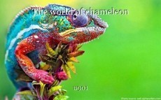 The world of chameleon