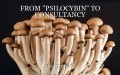 "FROM ""PSILOCYBIN"" TO CONSULTANCY"