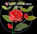 Where the Roses Grew