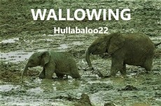 Wallowing