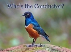 Who's the Conductor?
