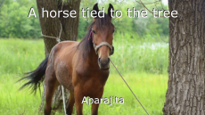 A horse tied to the tree