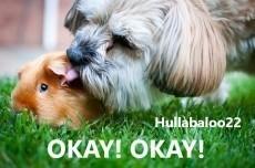 Okay! Okay!