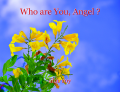 Who are You, Angel ?