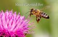 Rum Flavored Bee