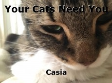 Your Cats Need You