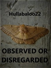 Observed Or Disregarded