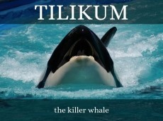 blackfish (tilikum) and what actually happened