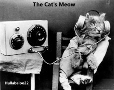 'The Cat's Meow'