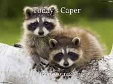 Today's Caper
