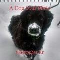 A Dog Soul Mate