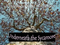 Underneath the Sycamore