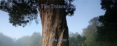 The Totara Log