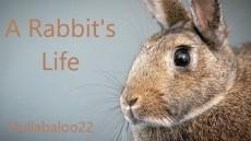 A Rabbit's Life