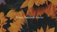 Even Autumn Leaves