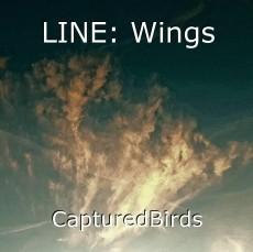 LINE: Wings