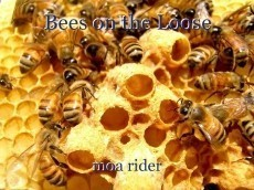 Bees on the Loose