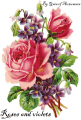 Roses and violets