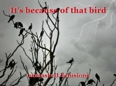 It's because of that bird
