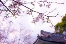 A Prayer to God (kami e no inori)