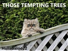 Those Tempting Trees