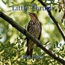 Little Thrush