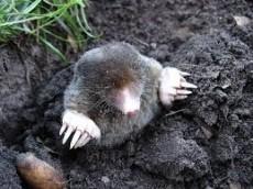 Mole Boy