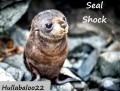 Seal Shock
