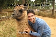 A day on the Llama farm
