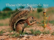Those Other Squirrels Are Missing Out