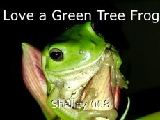 Love a Green Tree Frog