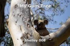 My Gum Tree